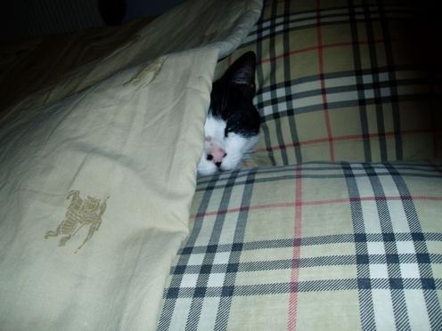 leo-le-chat-qui-dort1