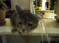 chat-echaude-craint-leau-froide-L-1