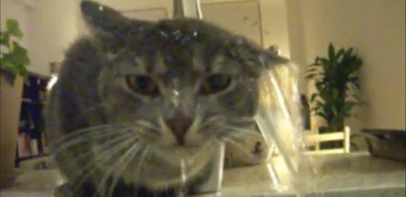 un-chat-prend-sa-douche