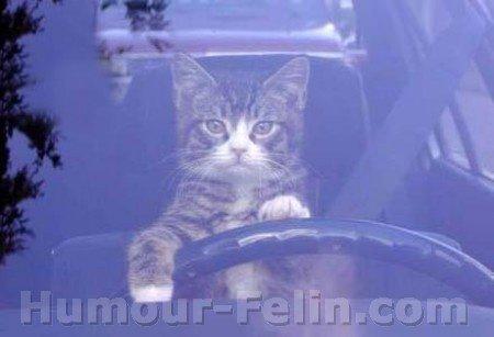 chat-au-volant