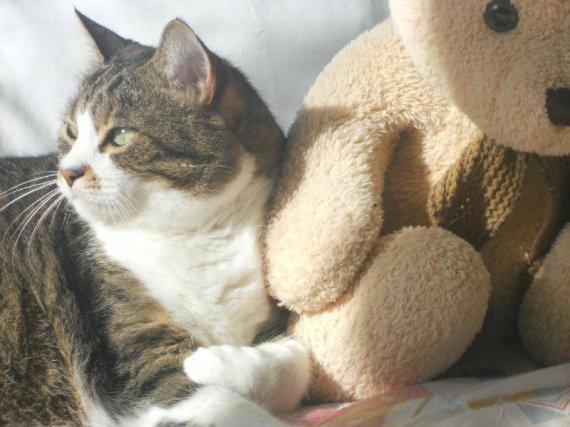 chat-et-soleil