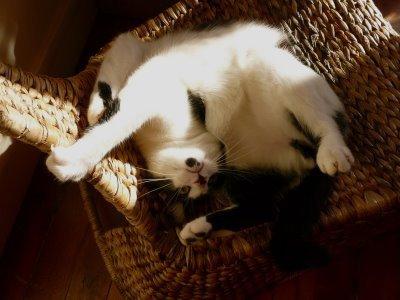 paresser au soleil -lili est insolente