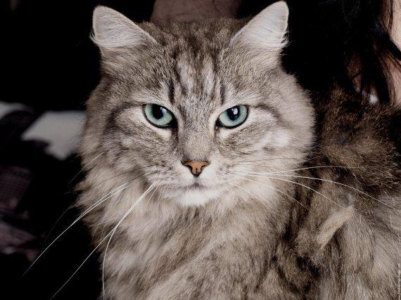 le-chat-20091115