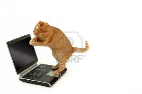 544738-extreamly-heureux-chat-est-debout-sur-un-ordinateur-portable