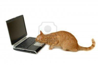 950793-un-chat-regarde-tres-interesse-sur-un-ecran-d-ordinateur-portatif