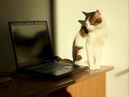 Chat--ordinateur-sans-souris