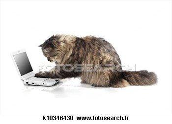 chat-travaux-ordinateur_~k10346430