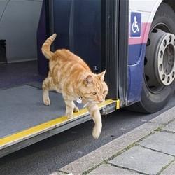chat-Dodger-prend-le-bus-PBridport-GB