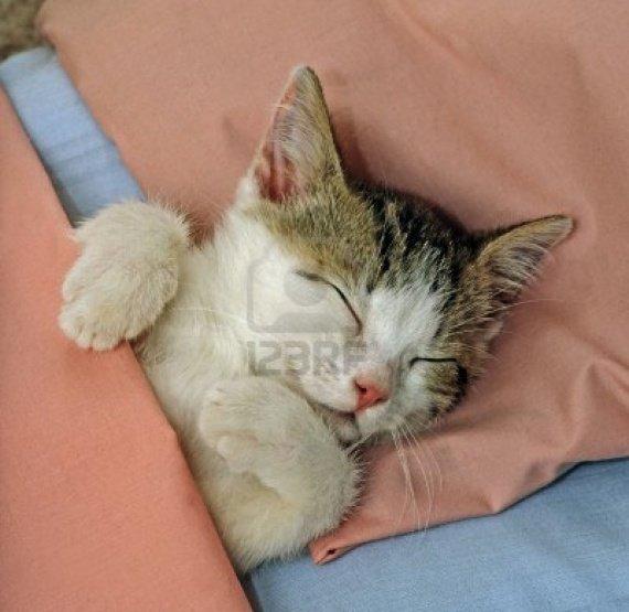 3662148-chat-dort-dans-lit-rose