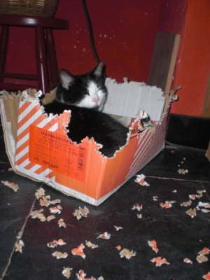 chat-qui-lit-photo-qui-fait-plus-rire_262596