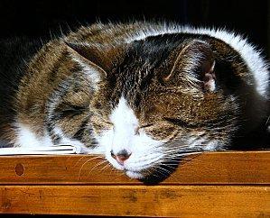chat-soleil-008
