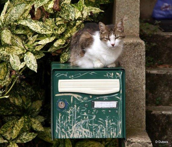 chats-trentemoult-L-3emNoQ