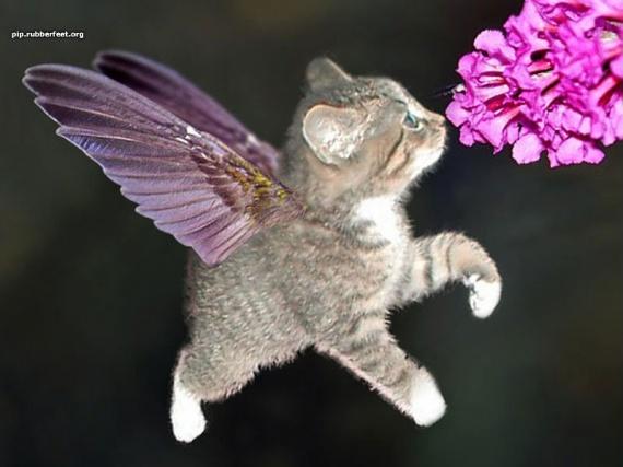 ange-chaton