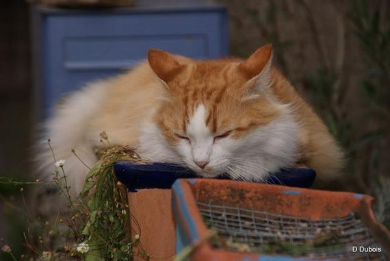 chats-trentemoult-L-V0JQU8