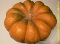 courge_musquee_de_Provence