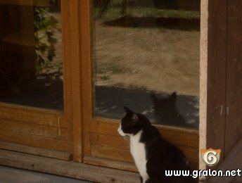 visuel-chat-devant-la-fenetre-1195