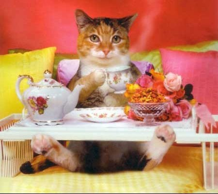 private-category-chat-gouter-img