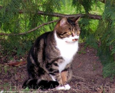 inspecteur-chat