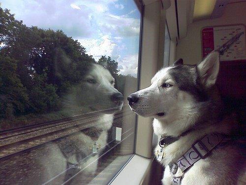 chien-train
