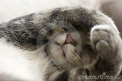 chat-timide-avec-des-pattes-au-dessus-de-visage