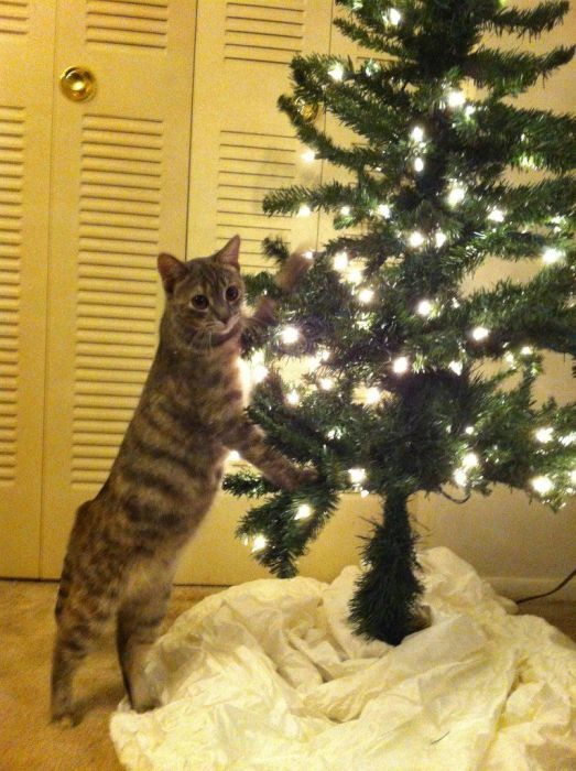 sapin-protection-chat-0