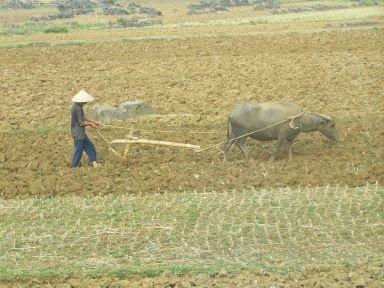 Vietnamien au travail