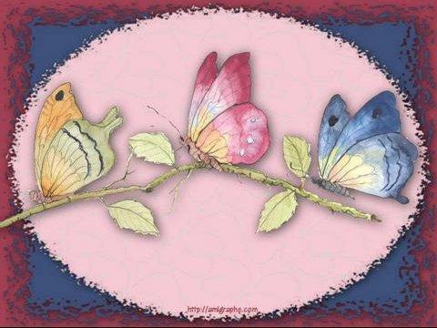 papillon-800