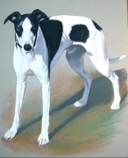 fulldog-pastel