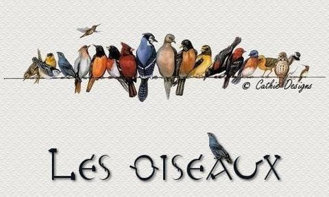 oiseaux-top