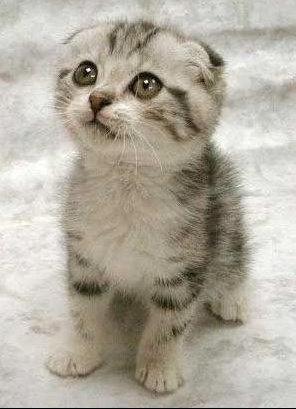 chatssor