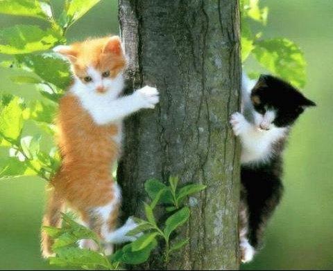 dans_les_arbres
