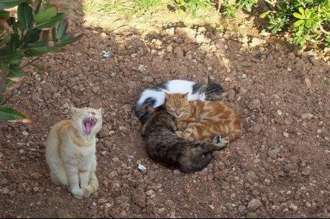 chat-animaux-sieste-jardin-ile-782237