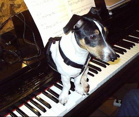 instrument-animaux-amour-pontiffroy-lorraine-761032
