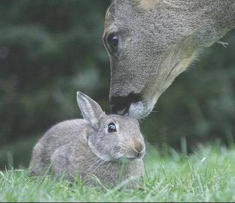 bambi4