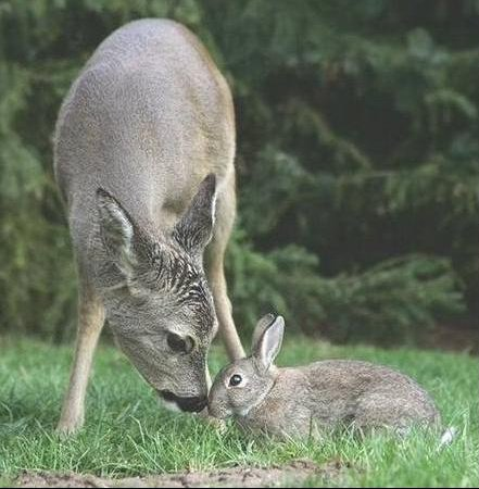 bambi5
