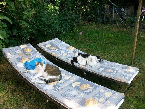chats repos