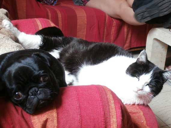 Boulette et Domino