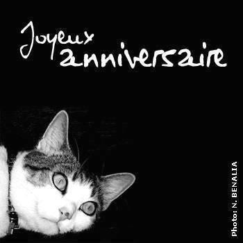 photo de chat anniversaire