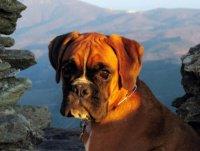 Boxer au soleil