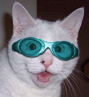 Chat binoclard