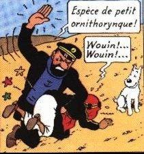 http://b.imdoc.fr/1/humour/quais-mats-chain/photo/2484909248/5178831474/quais-mats-chain-capitaine-haddock-vilain-img.jpg