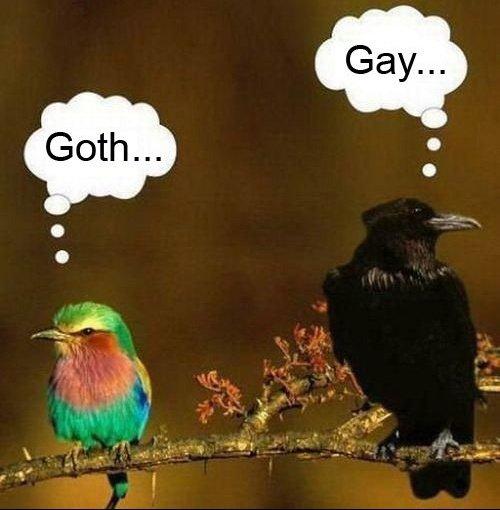 Gay VS Goth
