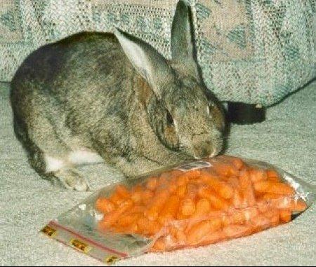 big_9606_carrots