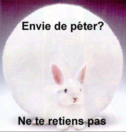 big_1735_lapin_peteur_1_