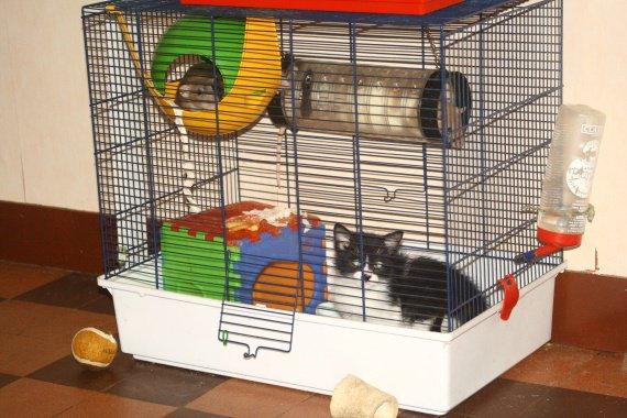 Mac Kormack et les rates