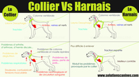 Collier-Vs-Harnais