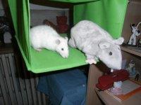 Pimousse et mr Rat