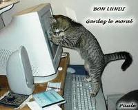 bon lundi chat