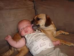 bb et chien
