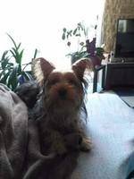 POLOCHON mon chien